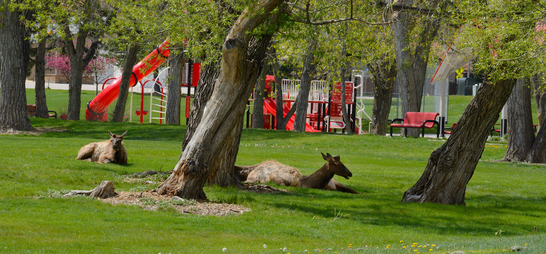 deer-in-park-arvada-co