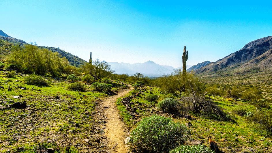 desert-scenery
