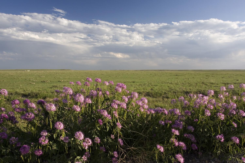 pawnee-grassland