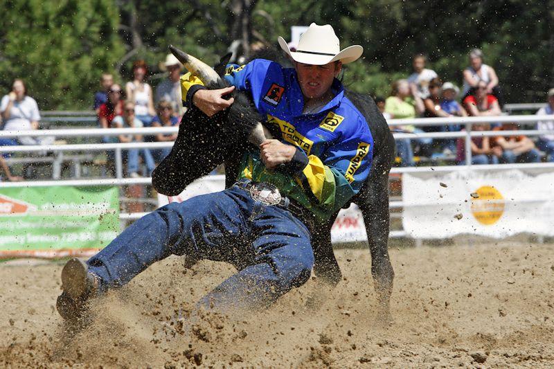 rodeo-cowboy-w-steer